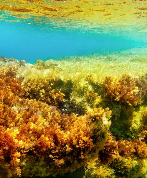 photo of kelp garden